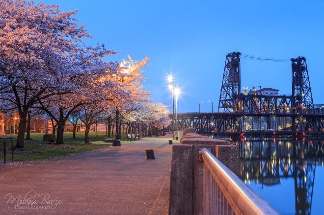 Waterfront Park and Steel Bridge